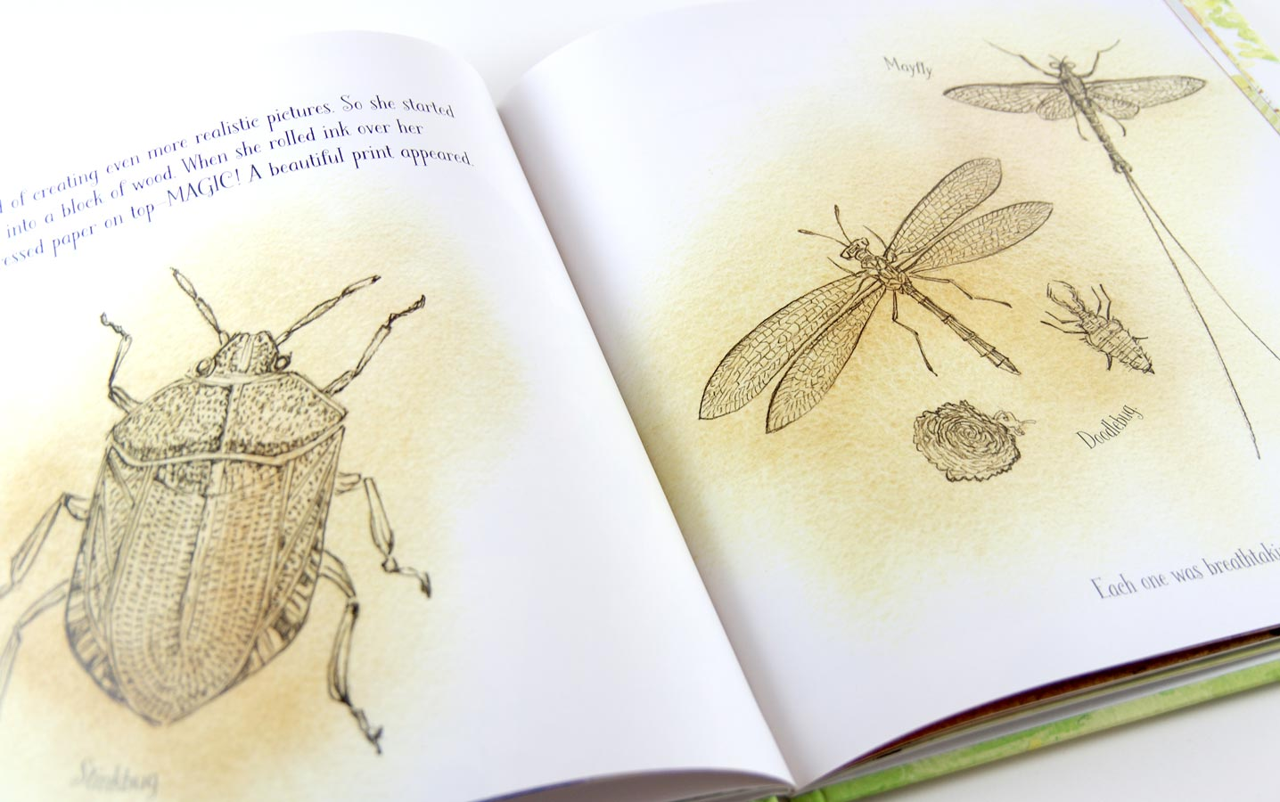 Watercolor illustration of insects drawn in the style of Anna Comstock's prints